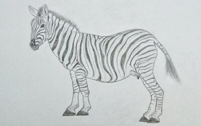 Why zebras don't get ulcers…